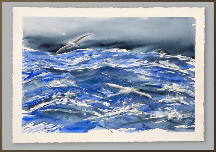 Albatross Syd Atlanten